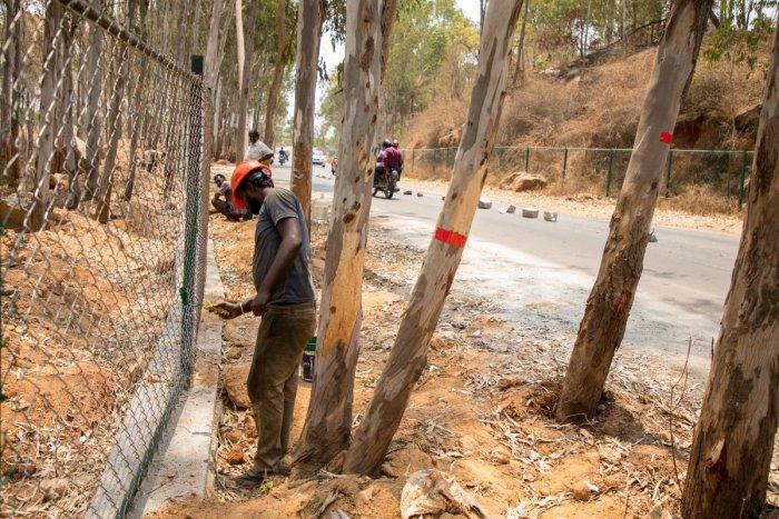 Turahalli Forest near Banashankari in Bengaluru. DH FILE PHOTO