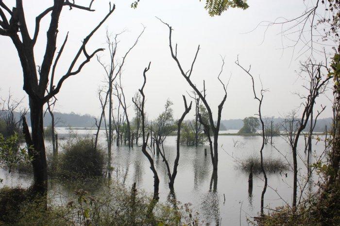 Mandagadde Dam