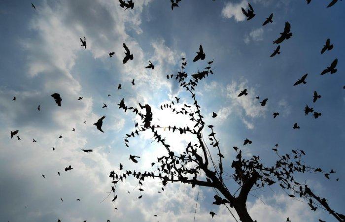 Birds To Humans Do Not Disturb Deccan Herald