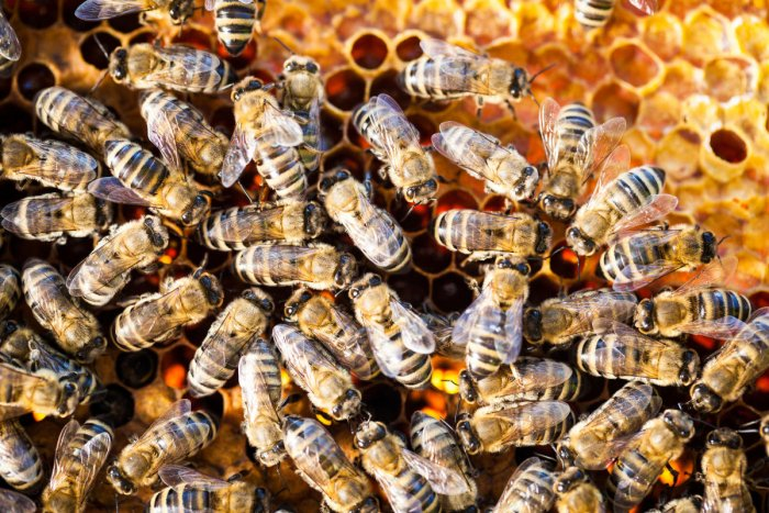 Prima facie, the incident occurred when a child hurled stones at the honey bee hives on a tree located near the banks of Pandhar river under Nimbola police station area on Sunday evening when a religious ceremony was going on, said Burhanpur District Hosp