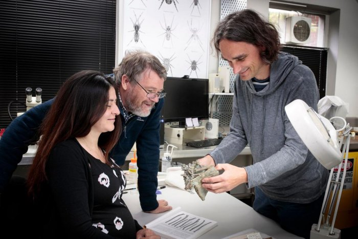 Researchers Vanesa De Pietri (L), Paul Scofield (C) and Gerald Mayr (R) with fossilised remains of crossvallia waiparensis, a species of penguin which lived off New Zealand's coast in the Paleocene era some 66-56 million years ago, at the Canterbury Museum. (AFP Photo)