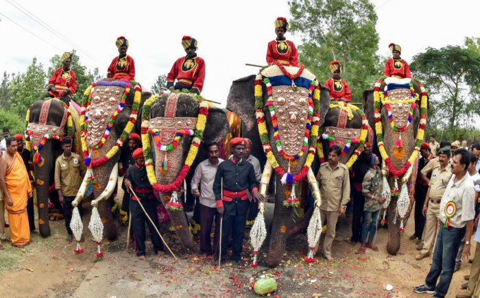 Dasara elephants during the Dasara Gajapayana begins from Nagapura for Nadahabba Mysuru Dasara-2017 on Saturday. DH photo