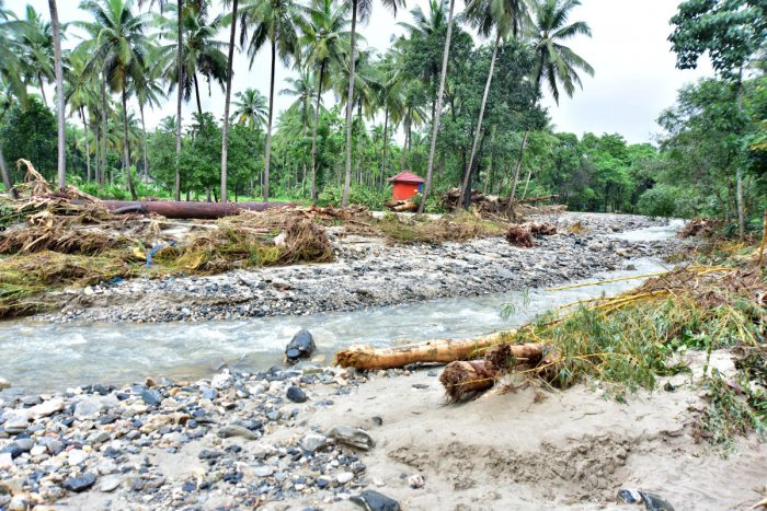 Driftwood brought by the flash flood at Didupe. DH Photos / Govindraj Javali