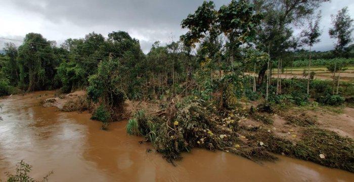 The driftwood that came along with the flood in Hemmakki Halla in Hemmakki near Kalasa.