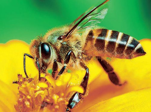 Bee tongues tell a tale of climate change