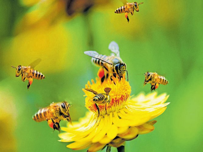 Bees feel the sting of climate change