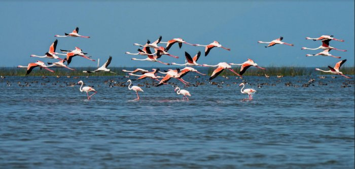 Chilika lake. (DH Photo)