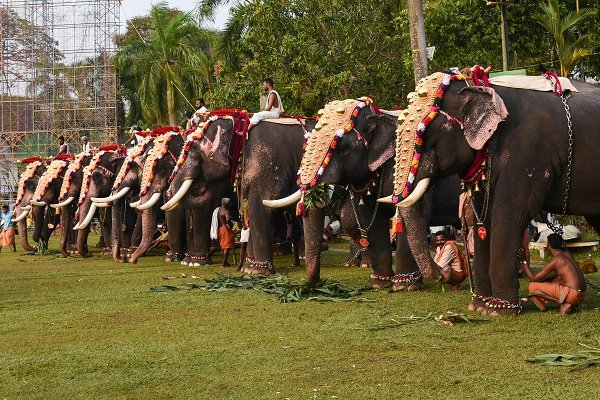 Higher violence in the stressed animals has resulted in human casualties too. In the state of Kerala which has a long tradition of keeping captive elephants. (File Photo)