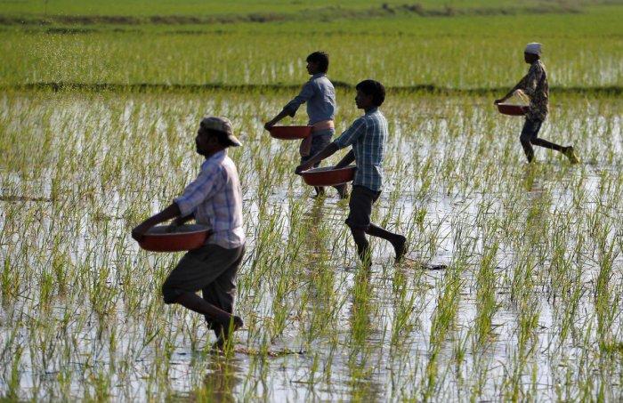 farmers fertilse the land