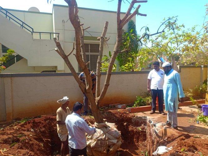 Since 2012, Aslamjahan Abbihal and his team have given a new lease of life to 155 trees (including mango, jackfruit, guava, sandalwood, teak, coconut, raintree, banana, tamarind, banyan and peepul) in Dharwad, Gadag, Bagalkot and Belagavi districts.