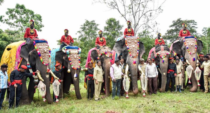 The first batch of elephants, participating in the Dasara festivities, started their journey from Veeranahosahalli, near Nagarahole forest in Hunsur taluk, to Mysuru on Thursday. DH photo