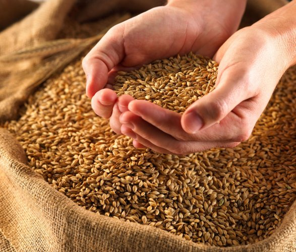 The government on Monday said it is hopeful of achieving the record foodgrain production target of 291.1 million tonnes for 2019-20. (File Photo)