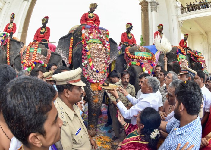 The elephants will camp on the Palace premises till the conclusion of the Dasara. The festival commences on September 29 and concludes with the Vijayadashami procession or Jamboo Savari on October 8.