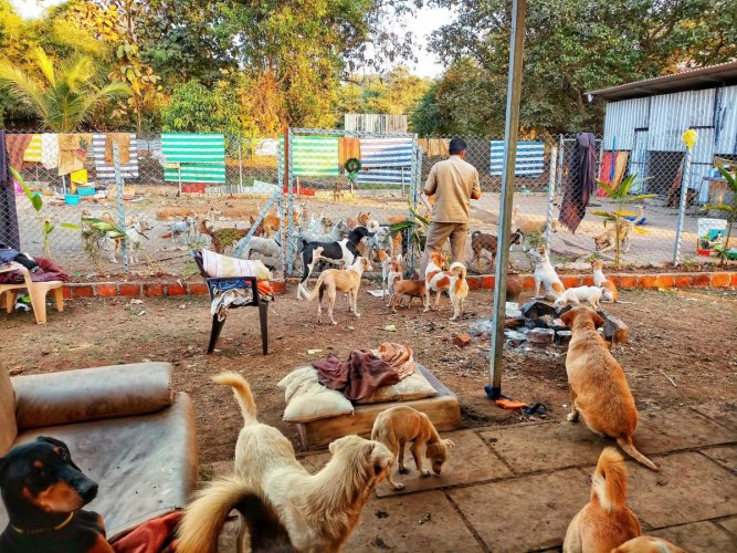Rescued pets at a CUPA centre in Bengaluru.(PICTURE FOR REPRESENTATION ONLY)