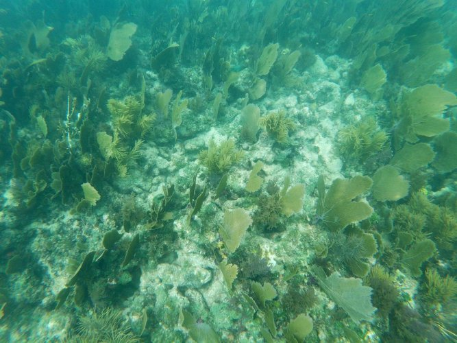 Dead and alive corals mixed with marine vegetation. (AFP Photo)