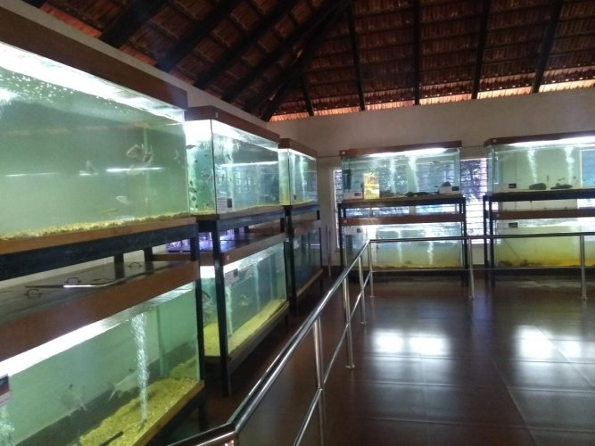 System in place Fish-breeding tanks at the Dr Shivaram Karanth Pilikula Nisarga Dhama aquarium, Mangaluru