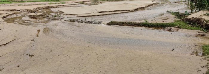 Sand accumulation in paddy fields at Karle in Kalasa taluk.