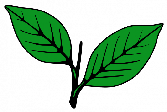 Veteran leader P J Joseph said that the state secretary cannot contest on Two Leaves symbol. (Image courtesy: Wikipedia)