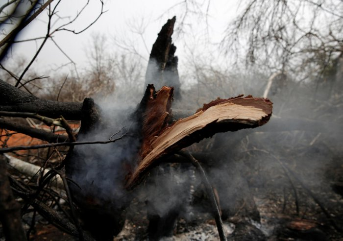 A tree trunk smoulders with smoke in the areas where wildfires have destroyed hectares of forest in Suarez Arana, Charagua, Bolivia. (Reuters Photo)