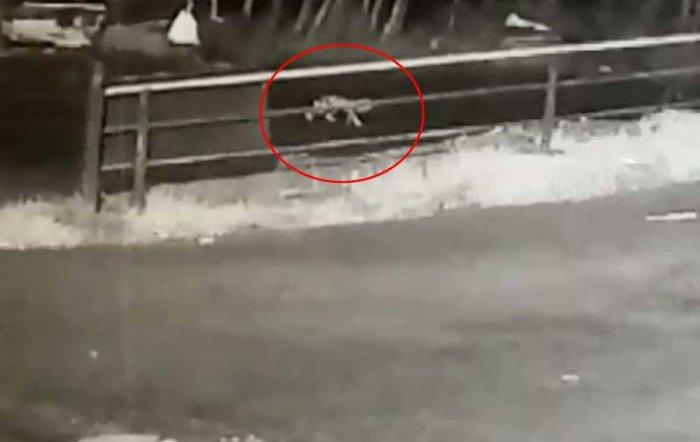 Screenshot from a CCTV video