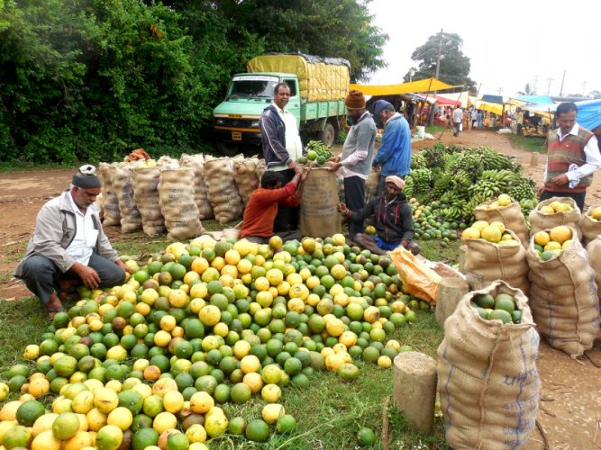 Vendors purchase wild lemons (Daggillikai) in bulk at the weekly shandy in Shanivarasanthe on Tuesday.