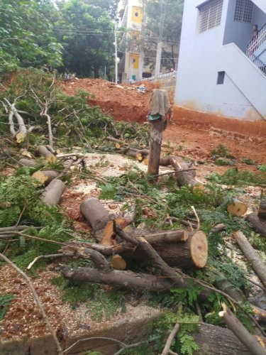 Case against resident for illegally felling trees | Deccan