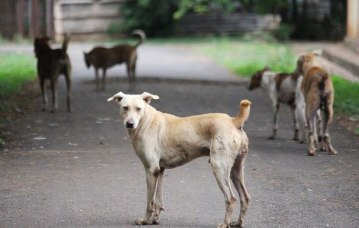 Health and Family Welfare has asked individual hospitals to produce anti-rabies vaccine on their own.