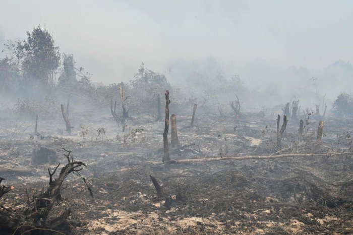 Smouldering peatland is pictured in Kampar, Riau province (AFP Photo)