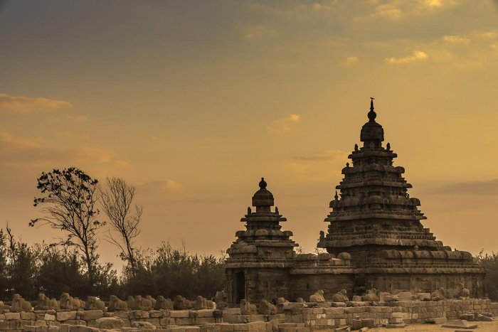 The Shore temple, dedicated to Lord Shiva, according to the ASI, is the earliest representation of structural temple at Mamallapuram dating to the Pallava Rajashima (Narashimha II) period (700-728 AD).