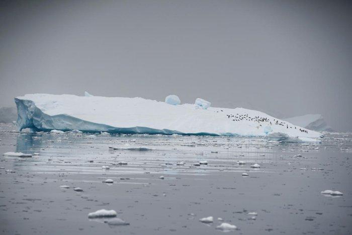 An iceberg floats in Andvord Bay, Antarctica. Retuers