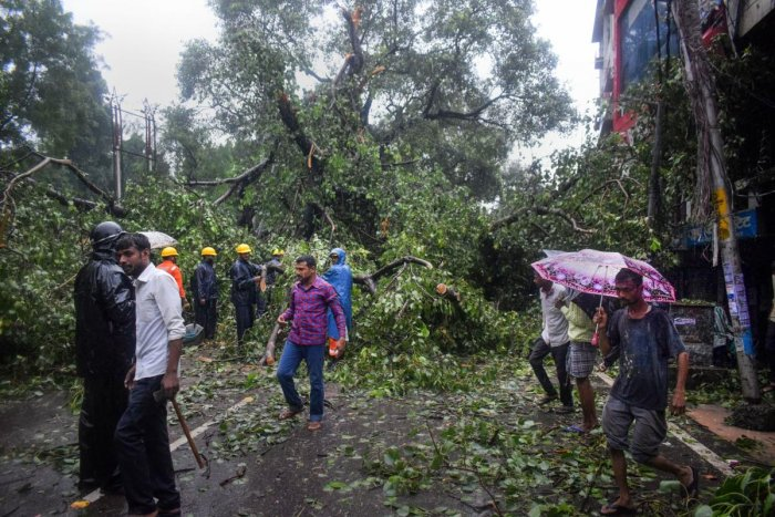 National Disaster Response Force (NDRF) personnel attempt to cut a tree which collapsed on a road during heavy rain, in Prayagraj, Friday, Sept. 27, 2019. (PTI Photo)