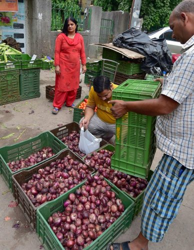 State-owned Mother Dairy has sold so far 5,000 tonnes onion at a subsidised rate of Rs 23.90 per kg in the national capital region and plans to further boost the supply to ensure consumers do no stand in long queues to buy the cheaper produce, according to its top official. (PTI Photo)