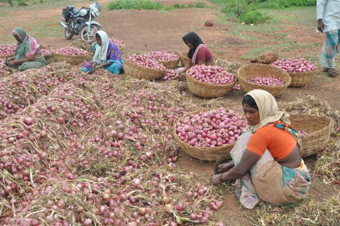 Workers cleaning onions at a farm in Mundaragi, Karnataka (DH File Photo)