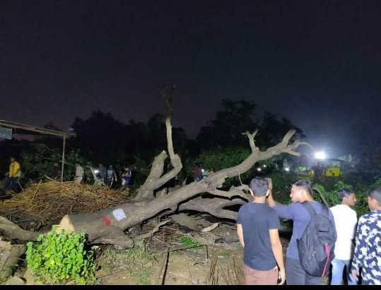 Of over 2,600 trees which are to be felled, 200 had been cut by Friday night, activists alleged. Photo/Twitter (AAP Maharashtra)