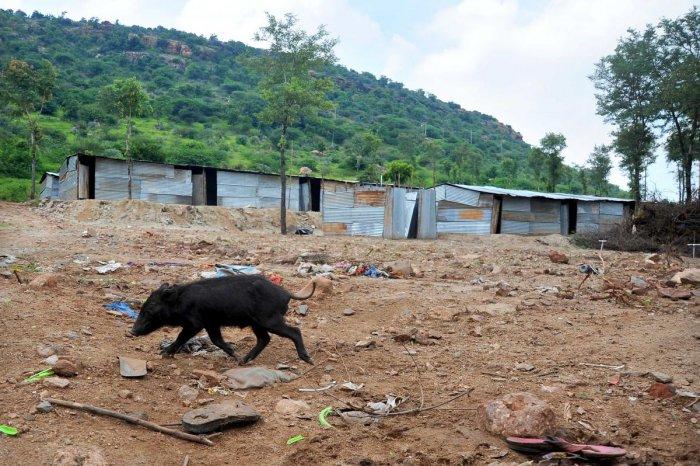 The tin-sheds built for those who lost houses at Gokak, Belagavi district. DH Photo/ Pushkar V
