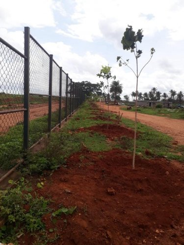 The BDA aims to plant one crore saplings under the Green Garland project. SPECIAL ARRANGEMENT