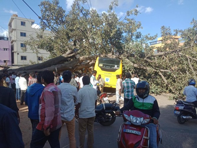 The tree that fell on a school bus in Varthur on Monday. SPECIAL ARRANGEMENT