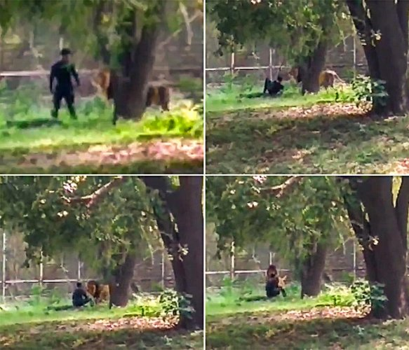 In this combo of 4 photos is seen Rehan Khan, a native of Bihar's East Champaran district, who jumped inside the enclosure of a lion at the zoo in Delhi, Thursday, Oct. 17, 2019. He escaped unhurt as the alert zoo staff acted quickly and tranquillised the animal. (PTI Photo)