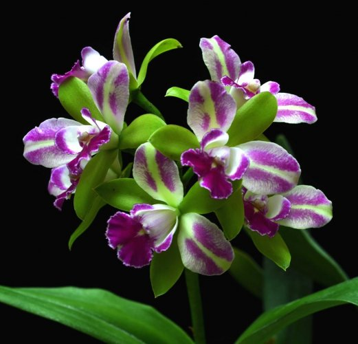 A wide varieties of orchid species will be on display.