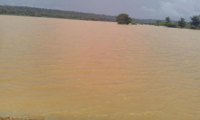 Water from River Lakshmanatheertha inundated the paddy fields on the Balele-Nittur stretch in Gonikoppa.