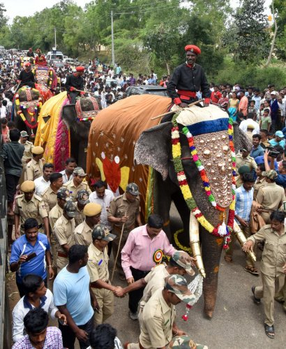 Gajayapayana, the elephants march to participate in Mysuru Dasara-2017.(dh file photo)