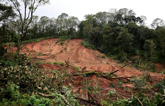 A coffee estate near Madikeri in Kodagu which was destroyed in a landslide. DH Photo
