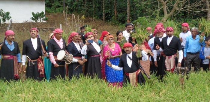 Codava National Council (CNC) president N U Nachappa harvests paddy in the field belonging to Uttappa in Chikkabettageri village near Kushalnagar, as a part of Huttari celebrations on Friday.
