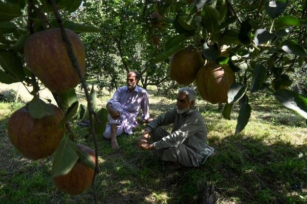 In this photograph taken on September 12, 2019, Ghulam Nabi Malik (R) and his brother Mohammad Yusuf Malik sit in their orchard as they talk about the crop of ripe apples at Malikgund village in Shopian district of southern Kashmir valley. (AFP photo)