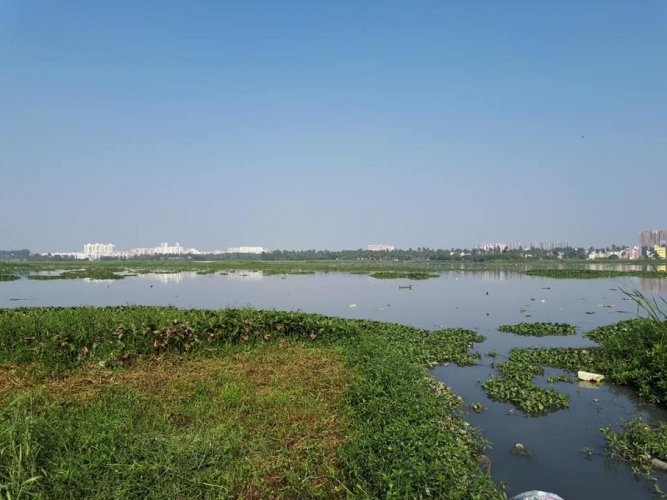 The green bench sought to know about the action taken against officials responsible for the pollution in Bellandur Lake. DH file photo