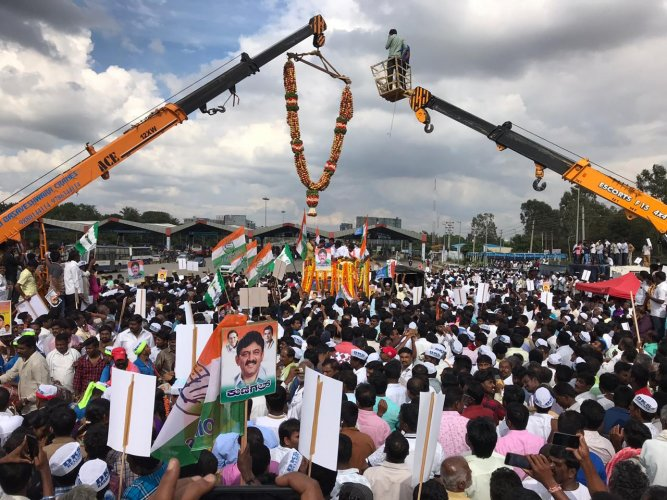 Shivakumar was given a grand welcome upon his arrival to Bengaluru, with massive garlands prepared for the Congress leader. DH Photo/Pushkar V