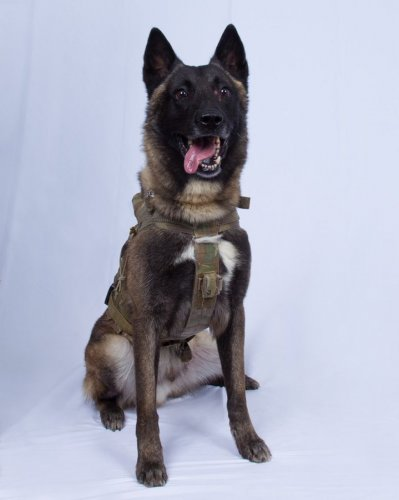President Donald Trump praised the dog in his remarks on Sunday describing the battle that took place at Baghdadi's compound. (Photo: Twitter/@realDonaldTrump)