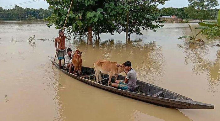 Villagers wade across a flooded area on a boat in Nagaon district of Assam, Monday, Oct. 28, 2019. (PTI Photo)