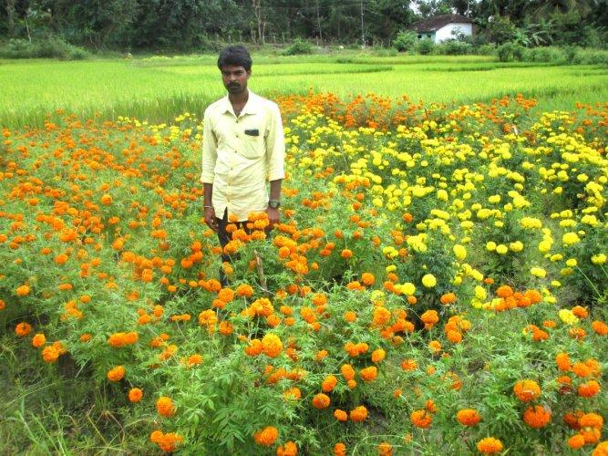 Lokesh amid marigold flowers at Shettikoppa in N R Pura taluk.
