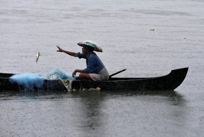 A fisherman collects fish from a net in the waters of Vembanad Lake during heavy rains caused by Cyclone Maha in Kochi on October 31, 2019. (REUTERS)